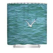 Gull Over The Gulf Shower Curtain
