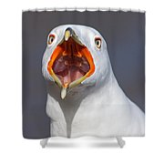 Gull Portrait Shower Curtain by Mircea Costina Photography