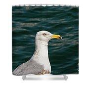 Gull Profile Shower Curtain
