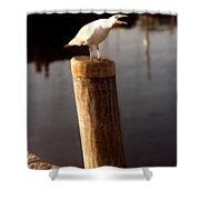 Gull Warning Shower Curtain