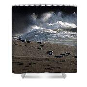 Gulls At Goat Rock Sundown Shower Curtain