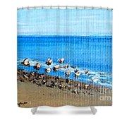 Gulls At Play Shower Curtain