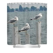 Gulls At Rest Shower Curtain