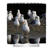 Gulls At The Beach Shower Curtain by Sue Harper