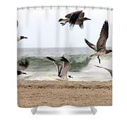 Gulls Away Shower Curtain