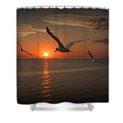Gulls Flying Towards The Sun Shower Curtain