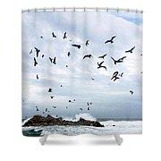 Gulls Of Carmel Shower Curtain
