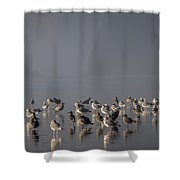 Gulls On A Foggy Beach Shower Curtain