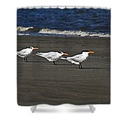 Gulls On Beach Shower Curtain