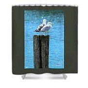 Gulls On Piling Shower Curtain