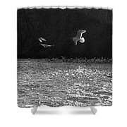 Gulls On The River Shower Curtain