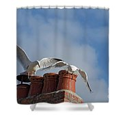 Gulls Shower Curtain