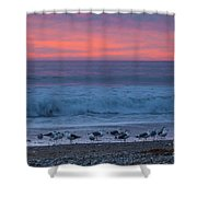 Gulls With Pink Sky Shower Curtain