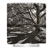 Gumbo Limbo Shower Curtain