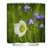Gunnison's Mariposa Lily Shower Curtain