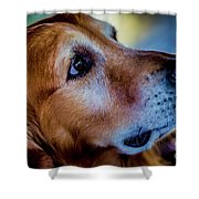 Gus As Photo Assistant 3504 Shower Curtain