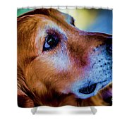 Gus As Photo Assistant 3504t2 Shower Curtain