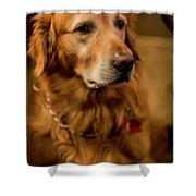 Gus Hoping To Share Some Bacon 3547v Shower Curtain