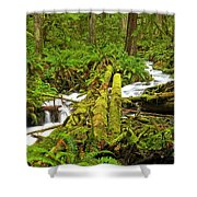 Gushing Through Ferns And Forest Shower Curtain