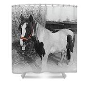 Gypsy Horse Shower Curtain