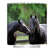 Gypsy Vanner Mares Shower Curtain