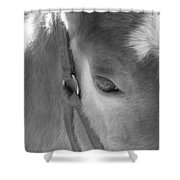 Haflinger Colt Shower Curtain