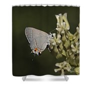 Hairstreak Butterfly Shower Curtain