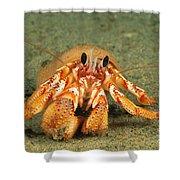 Hairy Hermit Crab Shower Curtain