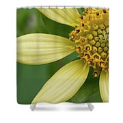 Hairy Leafcup #2 Shower Curtain