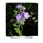 Hairy Phacella Wildflowe Shower Curtain