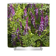 Hairy Vetch Shower Curtain