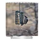 Hairy Woodpecker 1 Shower Curtain