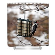 Hairy Woodpecker 2 Shower Curtain