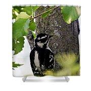 Downy Woodpecker 01 Shower Curtain