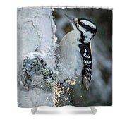 Hairy Woodpecker Female Shower Curtain