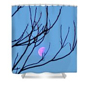 Half Moon Through The Trees Shower Curtain