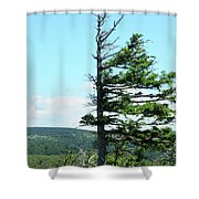 Halved Pine Shower Curtain