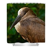 Hammerhead 2 Shower Curtain