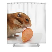 Hamster Eating A Carrot  Shower Curtain