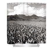 Hanalei Taro Fields Shower Curtain