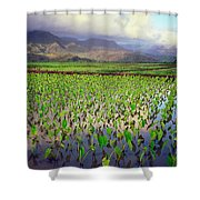 Hanalei Valley Taro Ponds Shower Curtain
