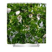 Handkerchief Tree Shower Curtain