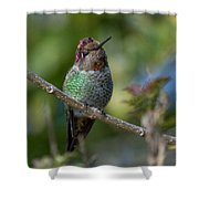 Curly Top Hummer Do Shower Curtain