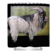 Handsome Pygmy Goat Shower Curtain