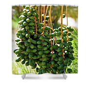 Hang Low Shower Curtain