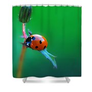 Hang Shower Curtain