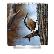 Hangin Out - Nuthatch Shower Curtain