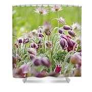 Hanging Blooms Shower Curtain