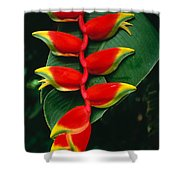 Hanging Heliconia Shower Curtain