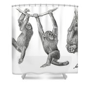 Hanging Monkies Shower Curtain